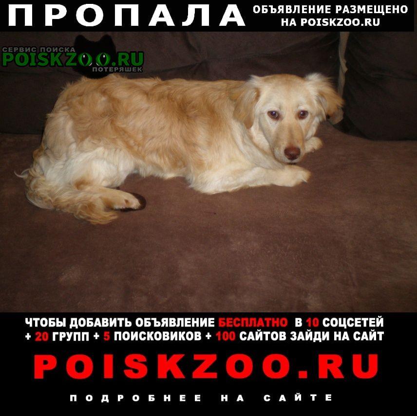 Пропала собака красносельский р-он Санкт-Петербург