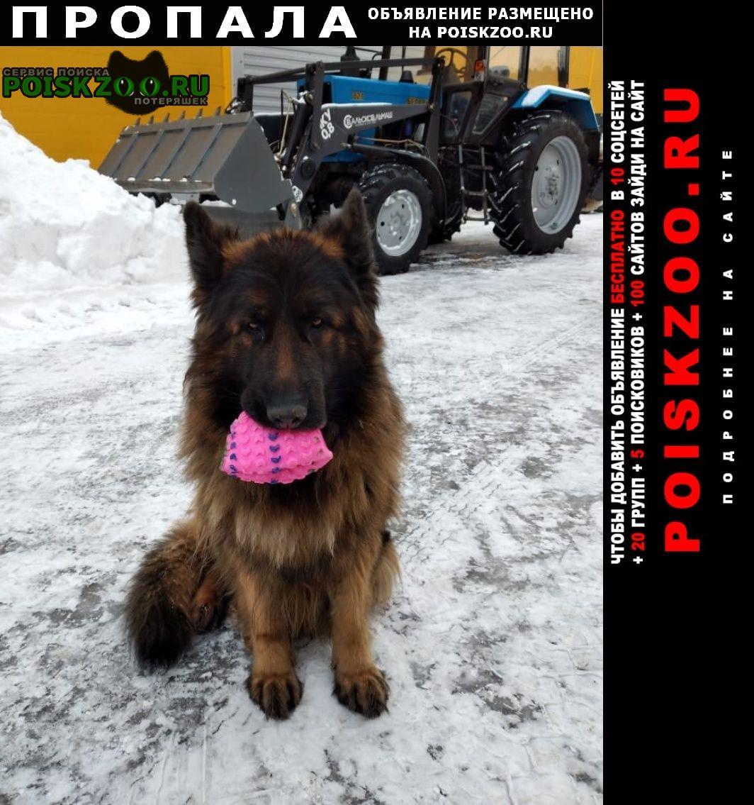 Пропала собака овчарка гвени Долгопрудный