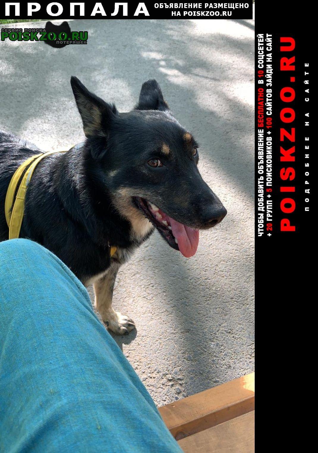 Пропала собака вознаграждение 2000 Екатеринбург