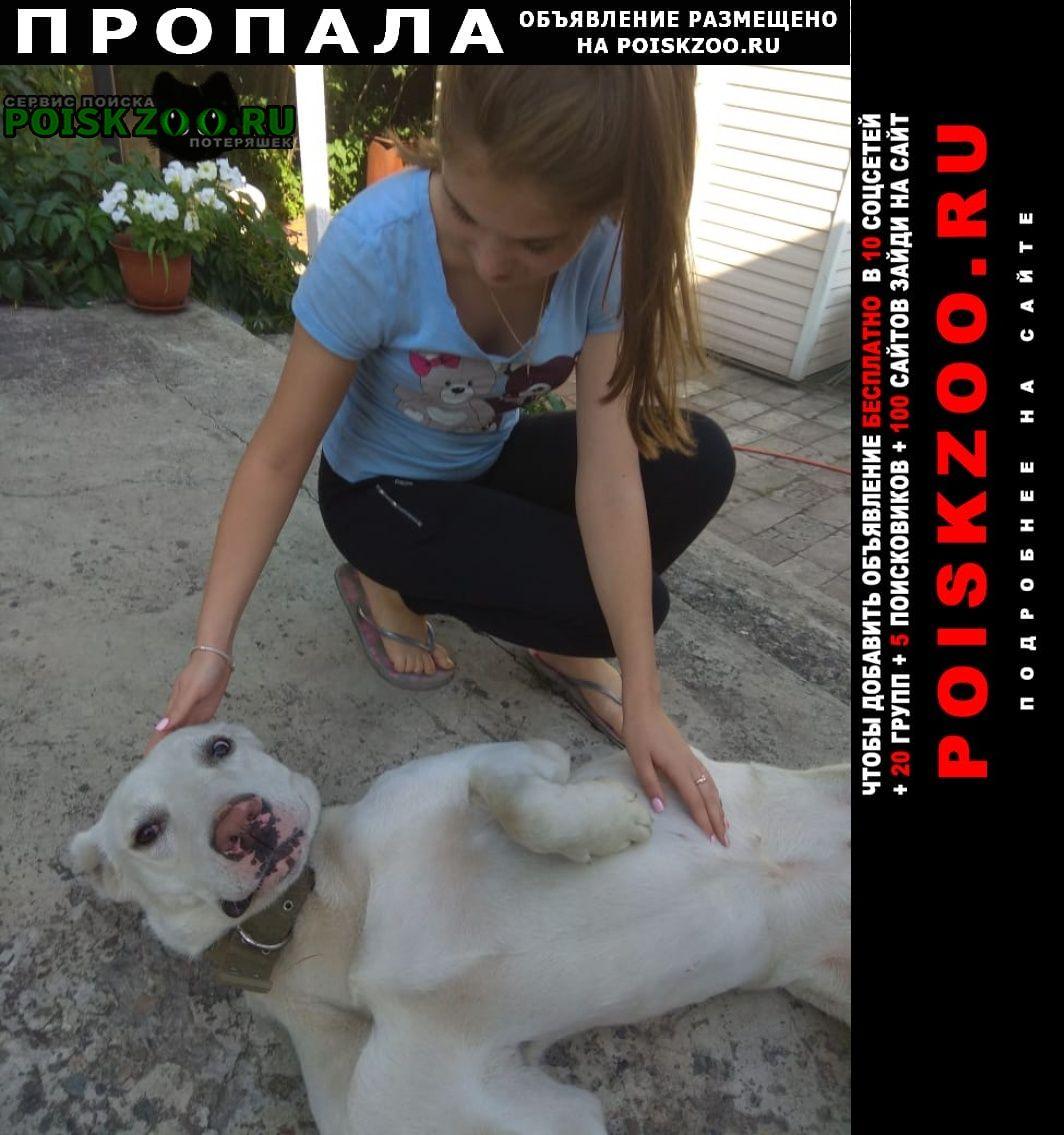 Пропала собака алабай Новокузнецк