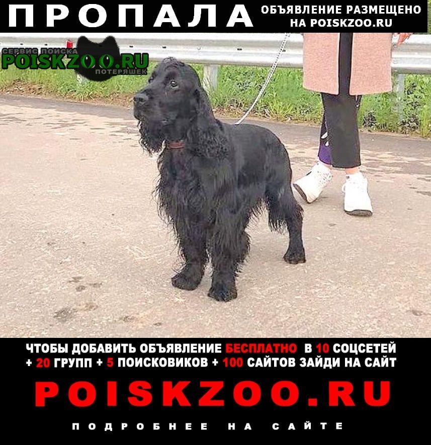 Пропала собака кобель кокер спаниель Солнечногорск