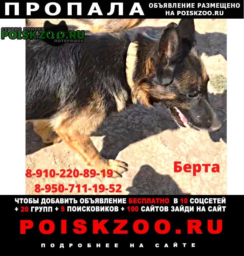 Пропала собака помогите найти Белгород