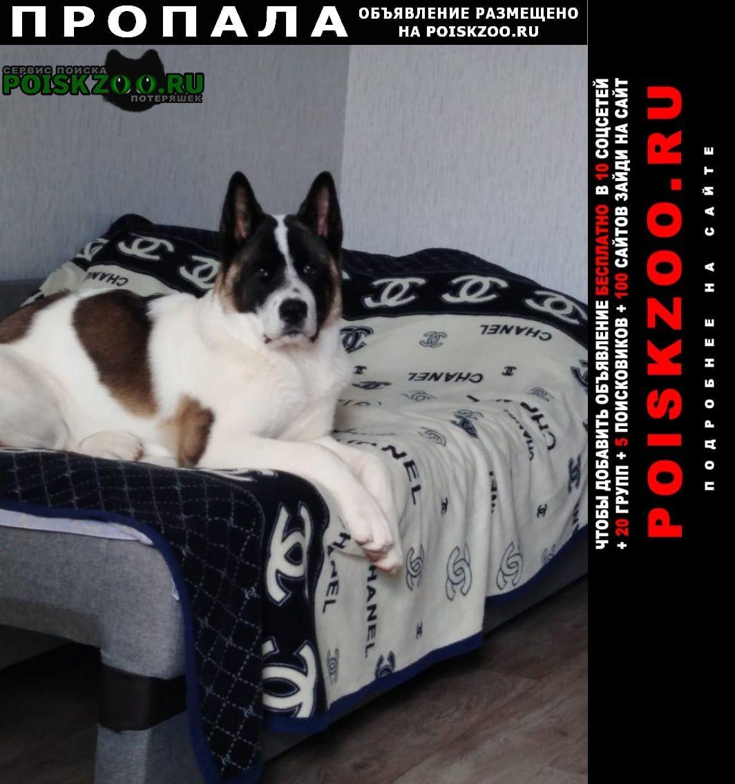 Пропала собака кобель Саратов