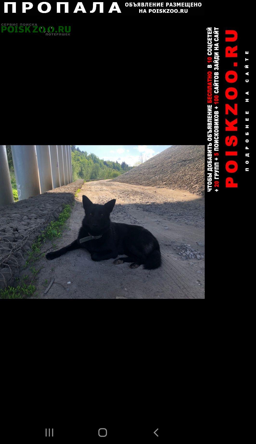 Пропала собака кобель пес по кличке чак Зеленоград