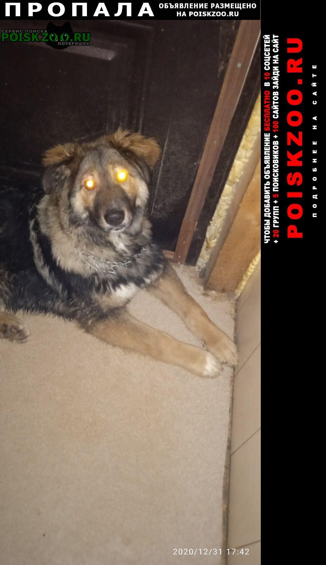 Пропала собака кобель кавказская овчарка Владимир