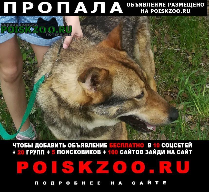 Пропала собака кобель Иваново