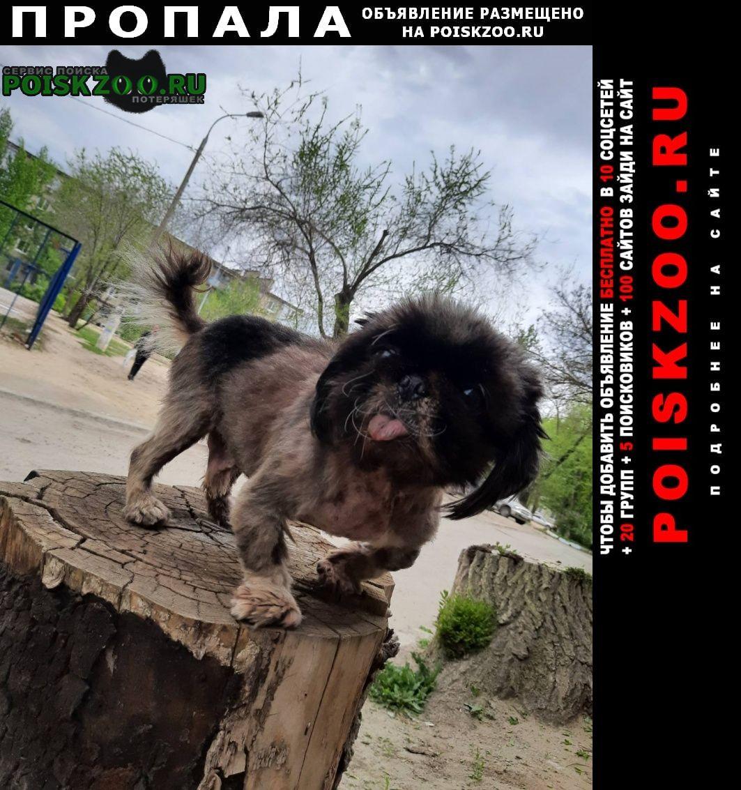 Пропала собака кобель украли во дворе Волгоград