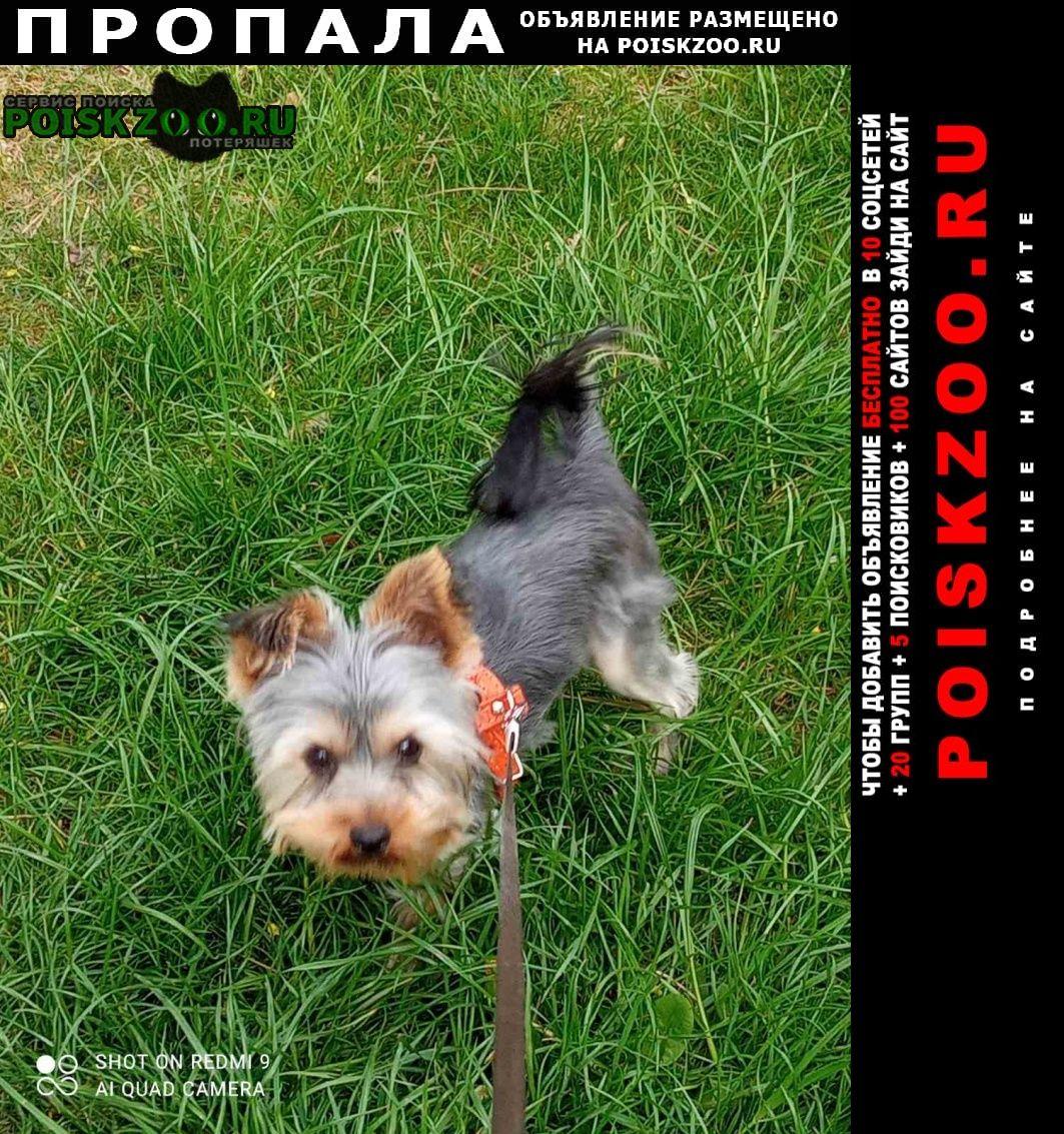 Пропала собака кобель Симферополь