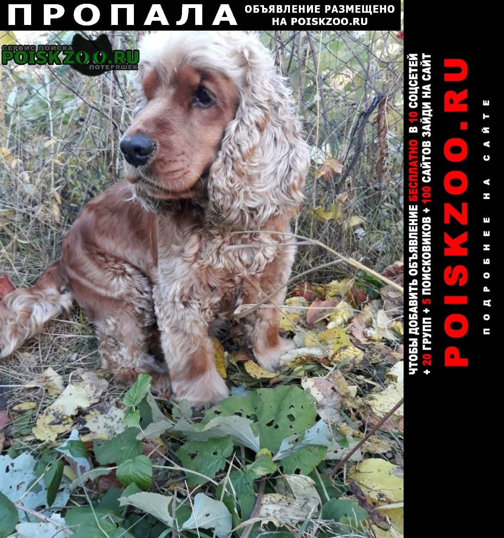 Пропала собака кобель. Иркутск