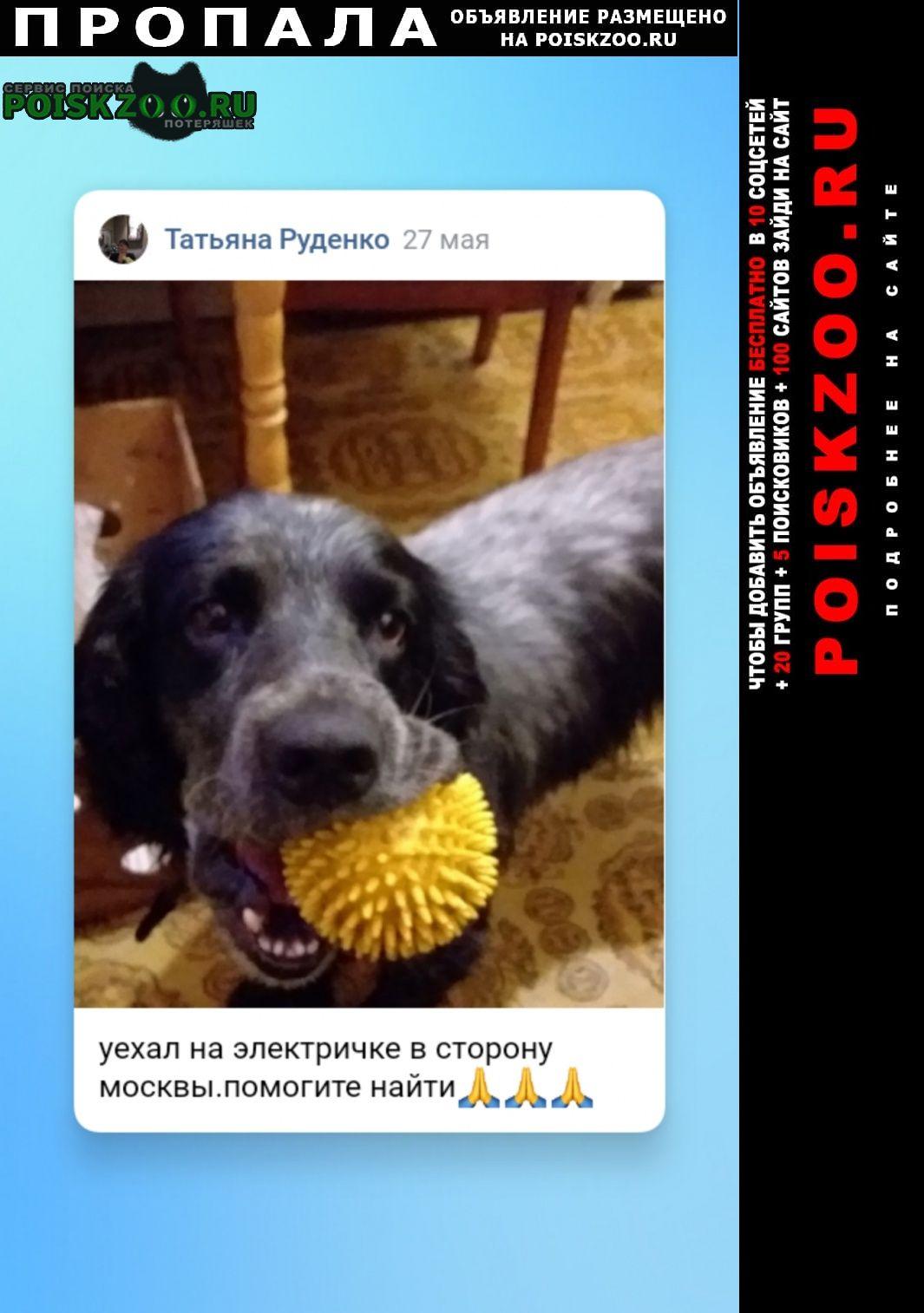 Пропала собака кобель уехал 27 мая на электричке в сторону мос Москва