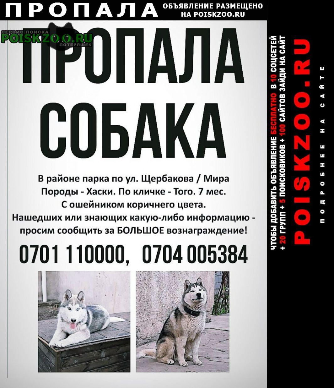 Пропала собака кобель Бишкек