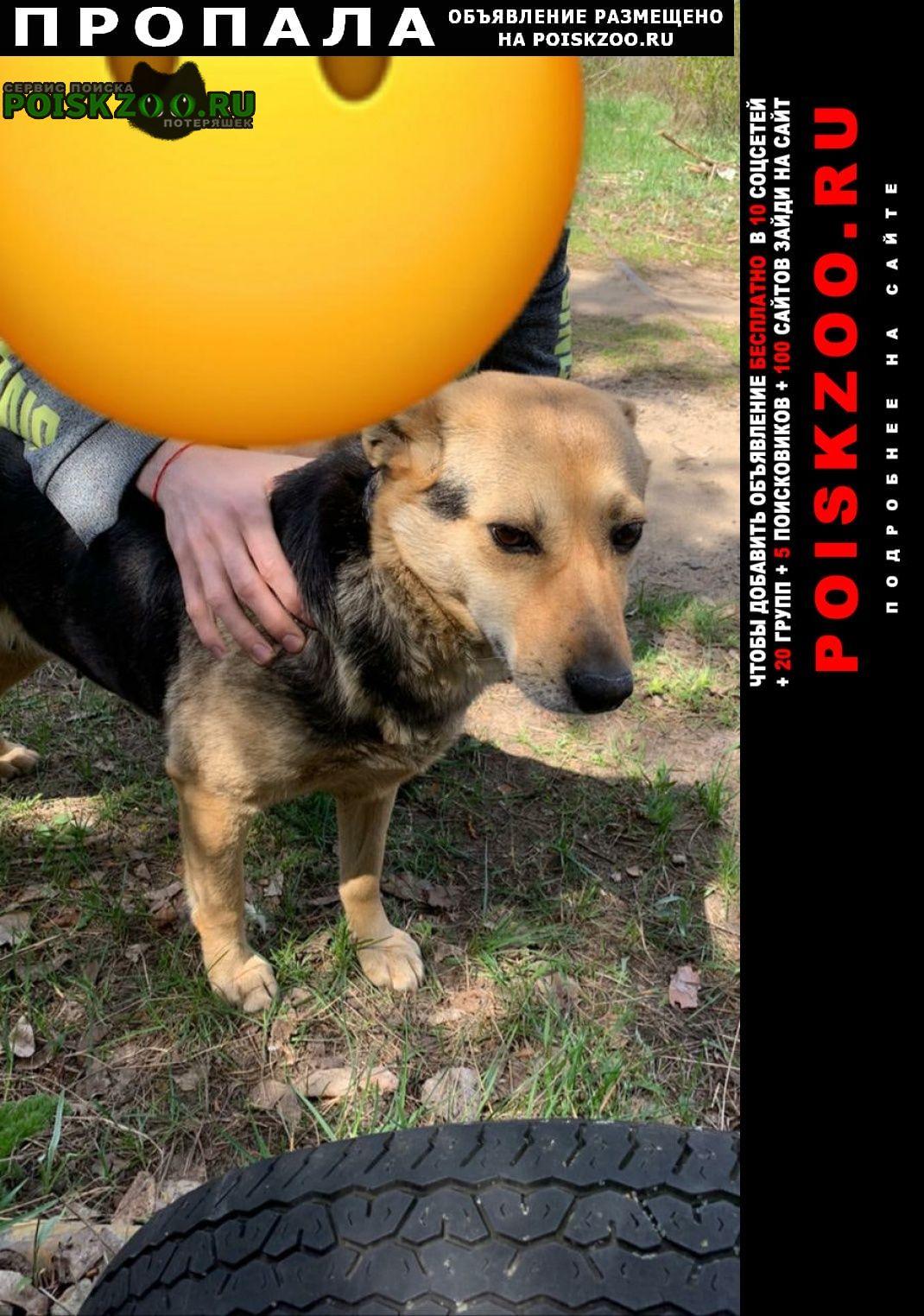 Пропала собака кобель продолжаем поиски Воронеж