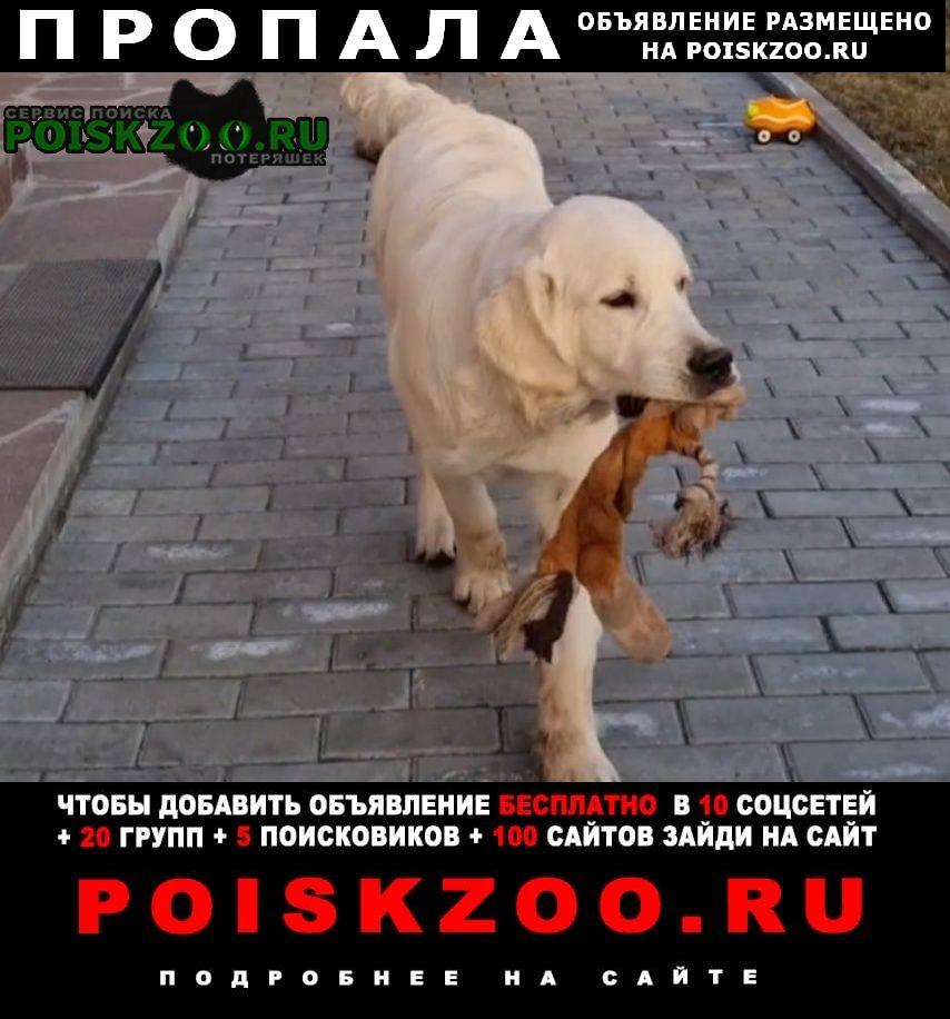 Пропала собака кобель Челябинск