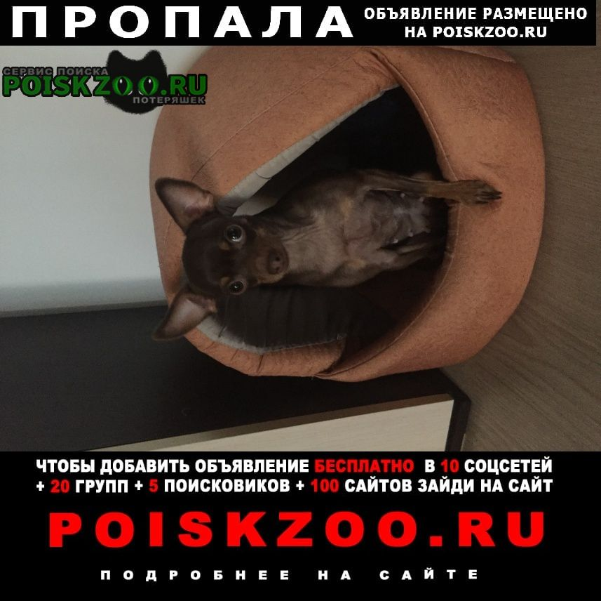 Пропала собака помогитете найти собачку Москва