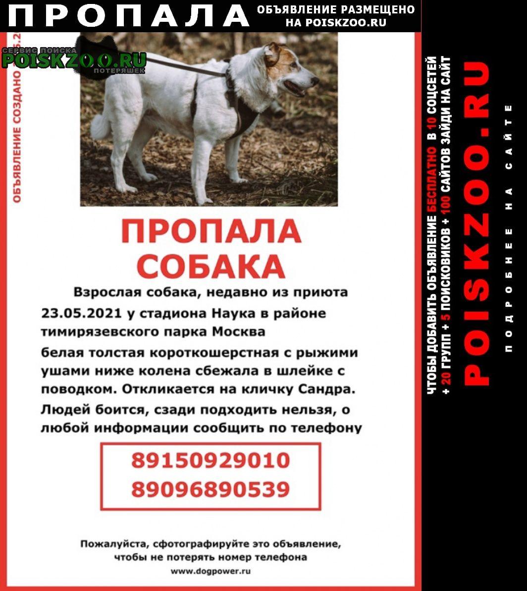 Пропала собака очень ищем друга Москва