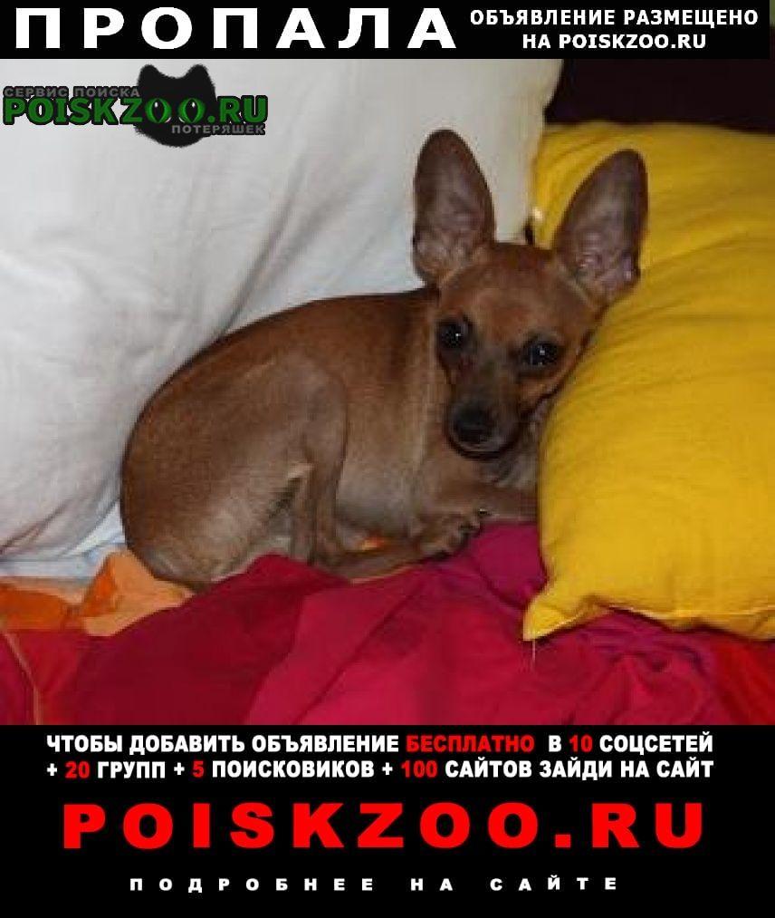Пропала собака кобель Магнитогорск