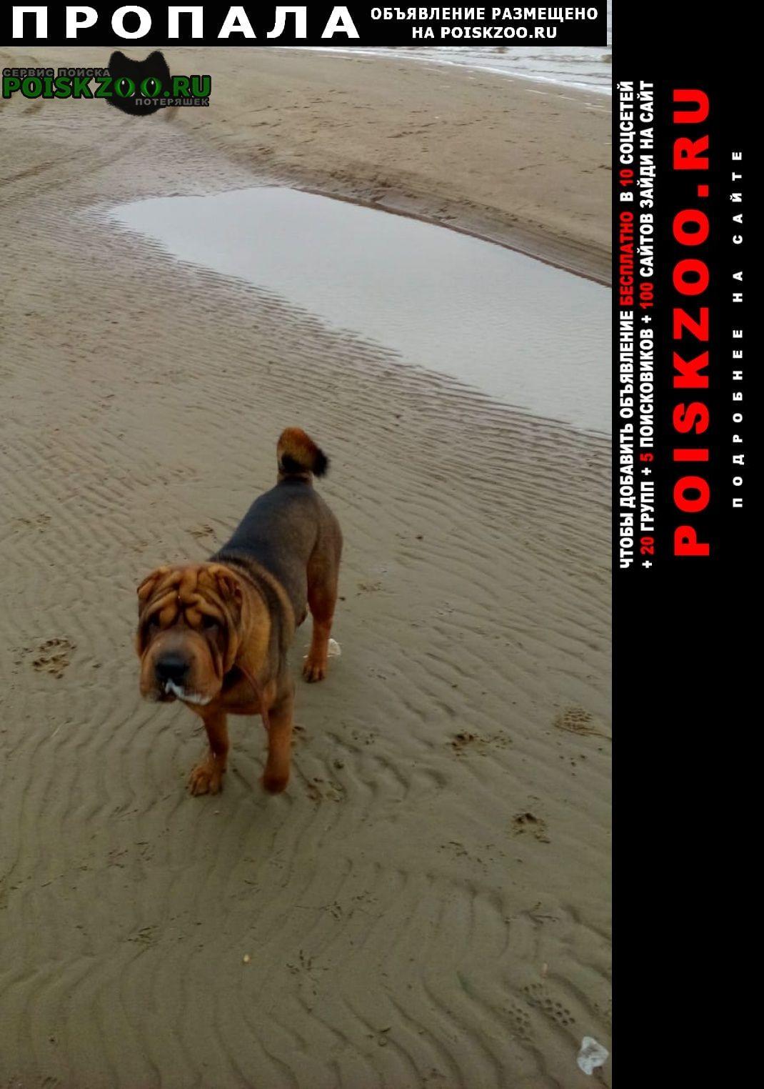 Пропала собака кобель помогите найти собаку Волгоград
