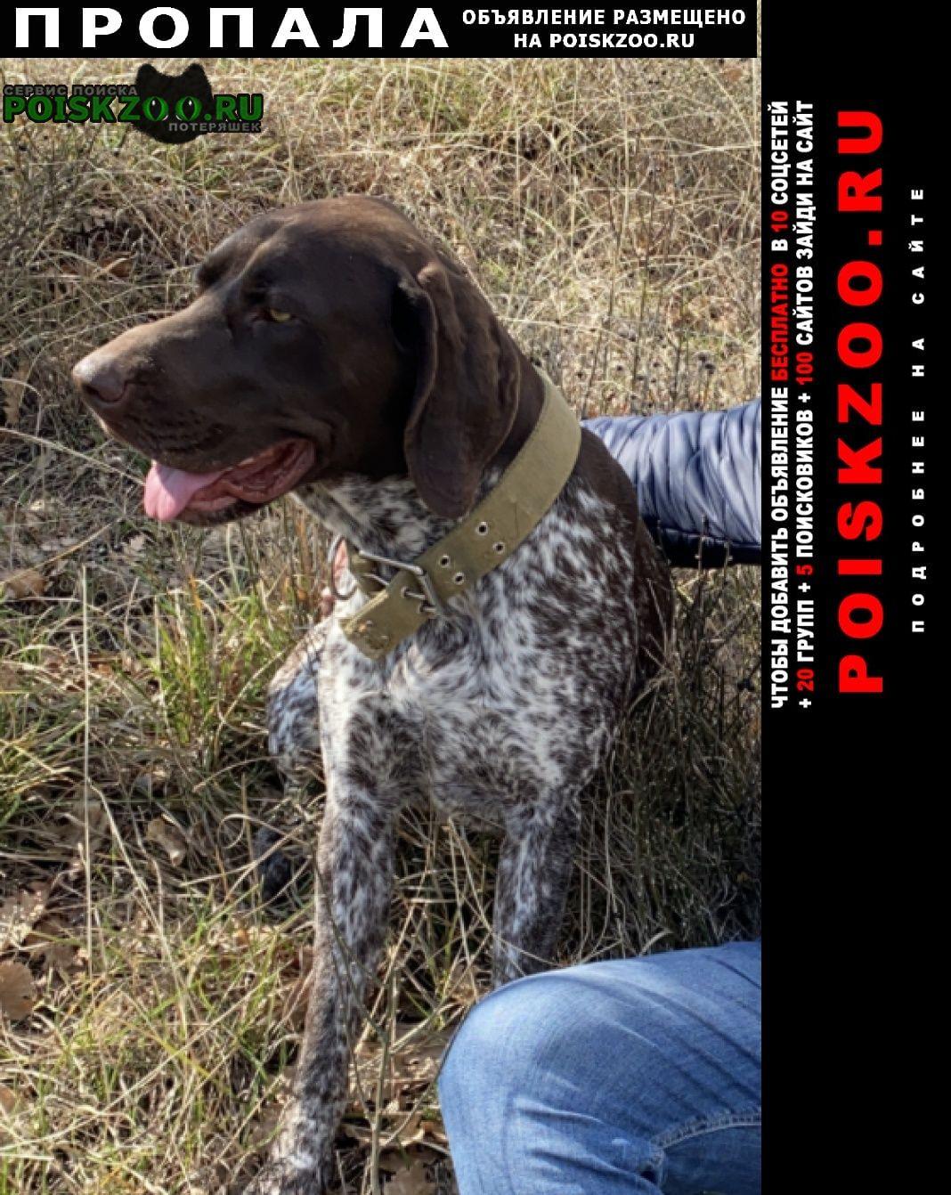 Пропала собака кобель Геленджик