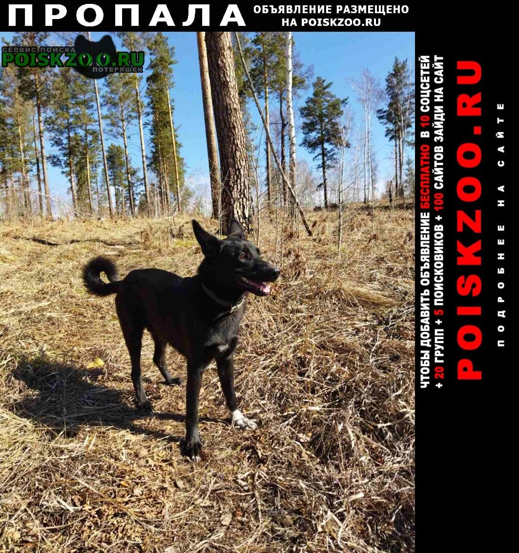 Пропала собака кобель Шелехов
