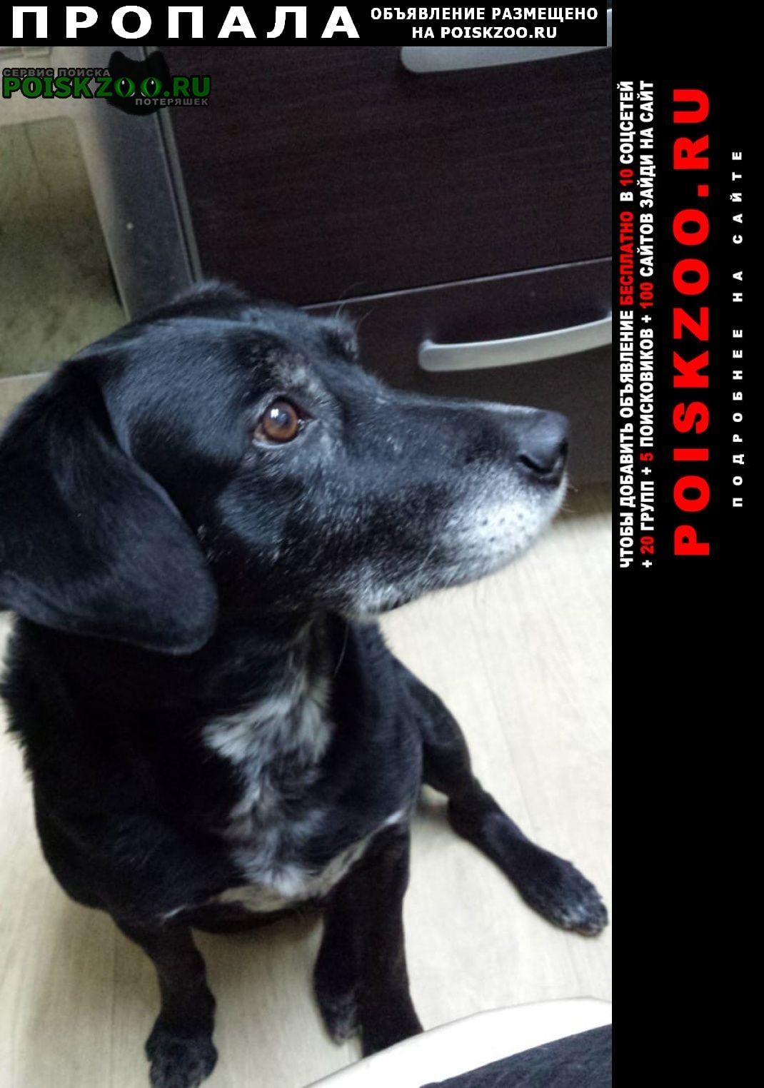 Пропала собака кобель помогите пожалуйста найти Домодедово
