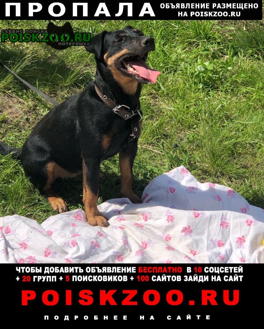 Пропала собака Курск