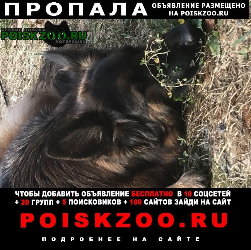Пропала собака немецкая овчарка Истра