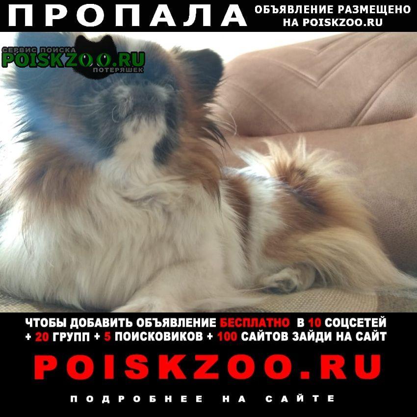 Пропала собака Кустанай
