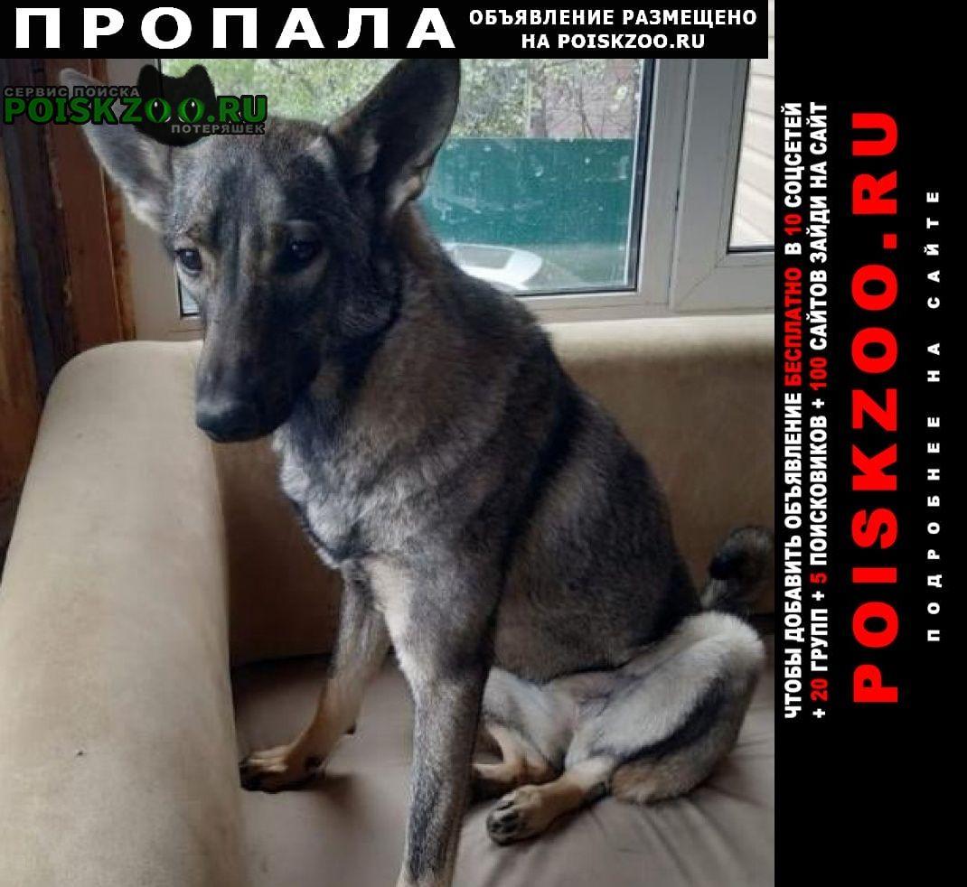 Пропала собака новая, калужское шоссе, вороново Москва