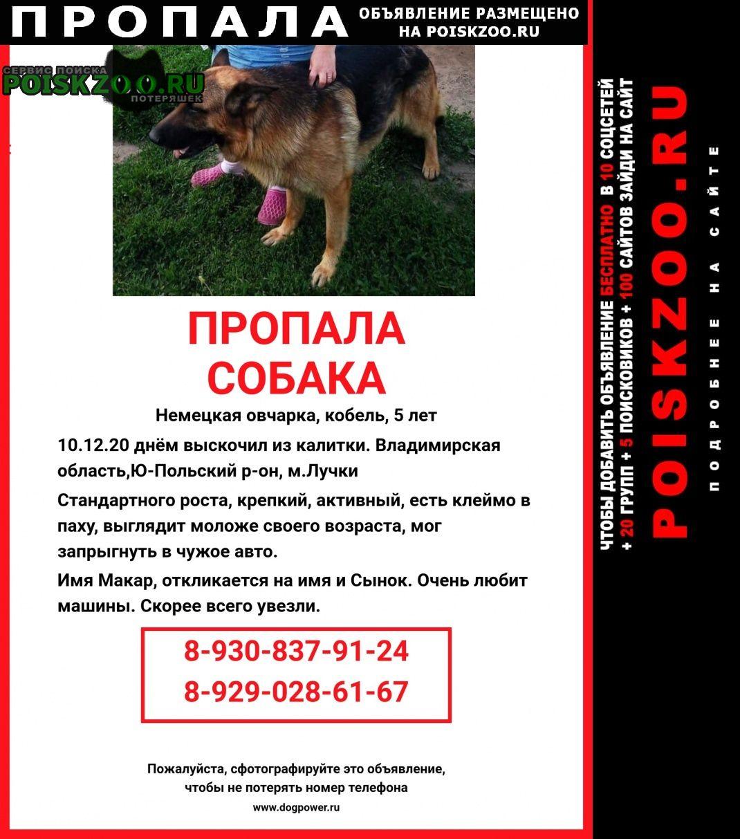 Пропала собака кобель немецкая овчарка Юрьев-Польский