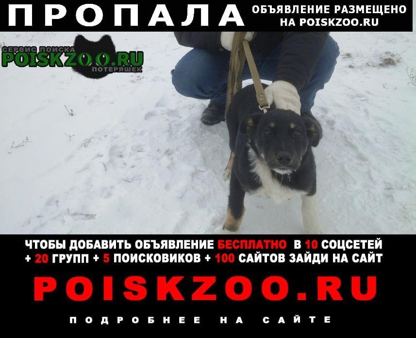 Пропала собака девочка, зовут дина Ростов-на-Дону