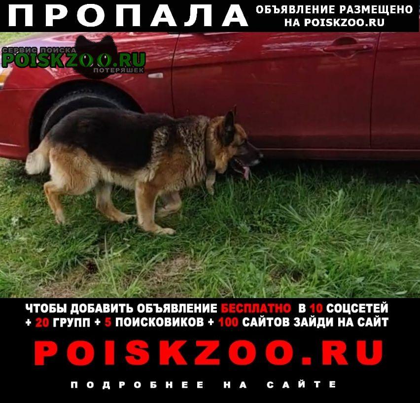 Пропала собака кобель Высоковск