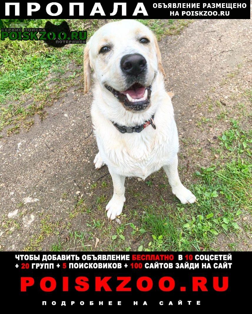 Пропала собака кобель кабель лабрадор по кличке бадди Руза
