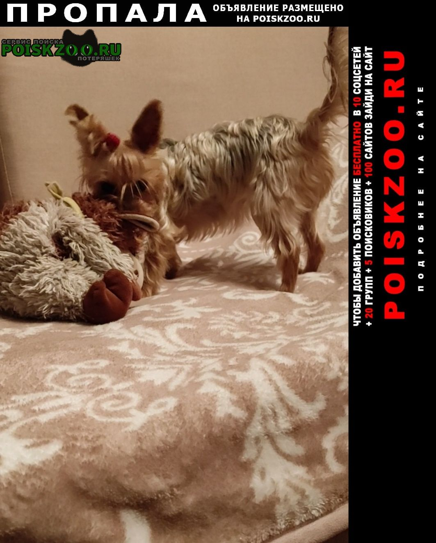 Пропала собака йорк терьер девочка Москва