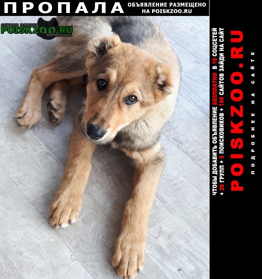 Пропала собака кобель щенок алабая Приволжск