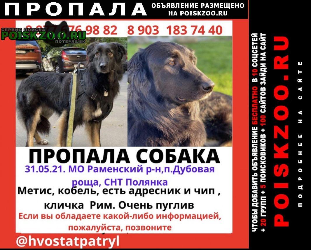 Пропала собака кобель раменский район, дубовая роща Раменское