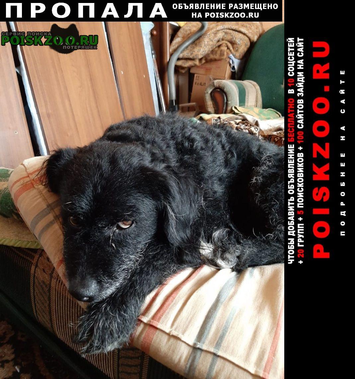 Пропала собака кобель Темрюк