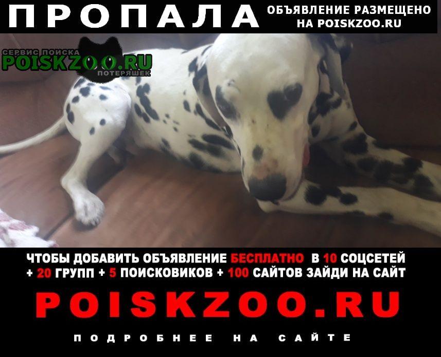 Пропала собака кобель Лабинск