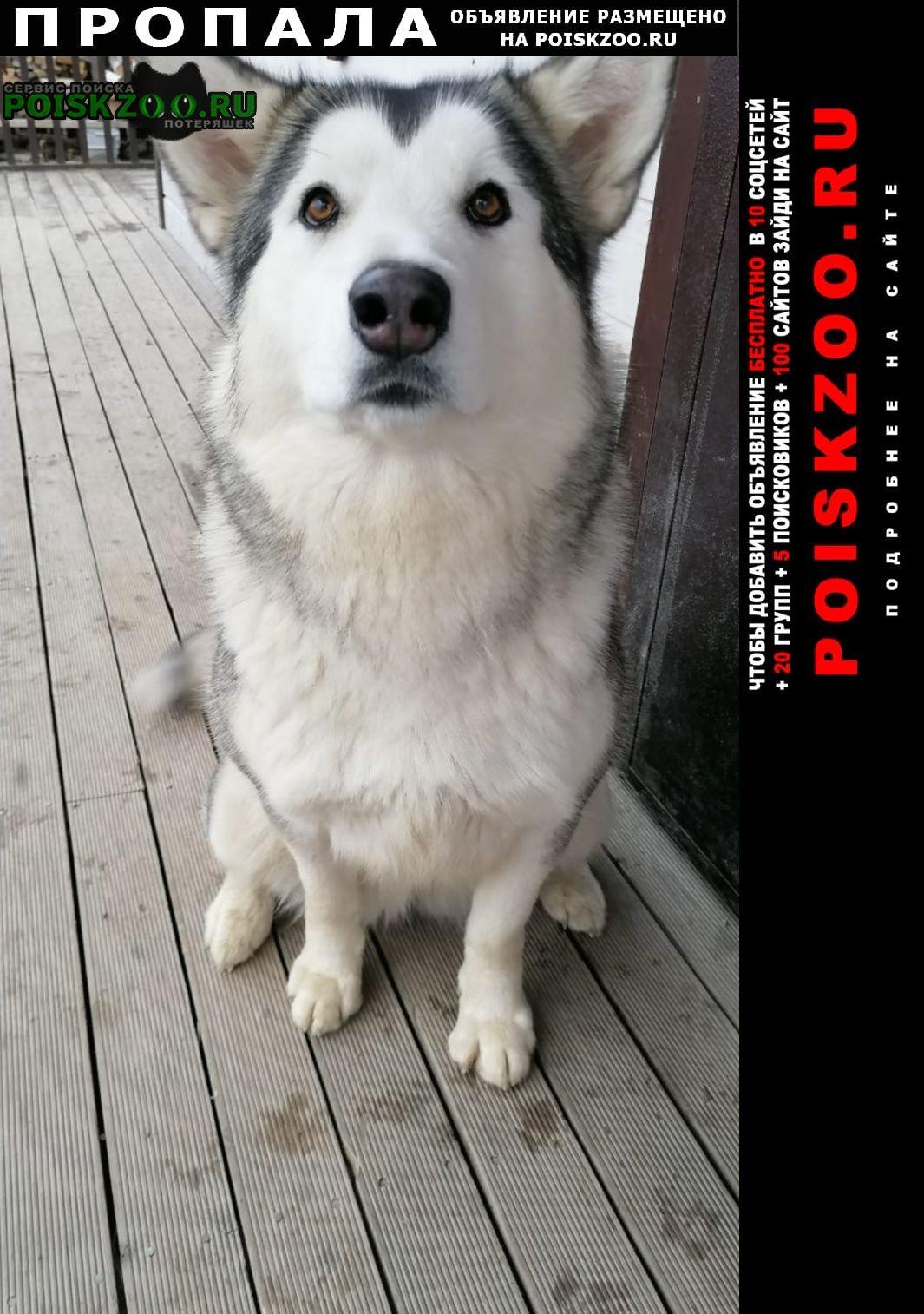 Пропала собака помогите Первоуральск