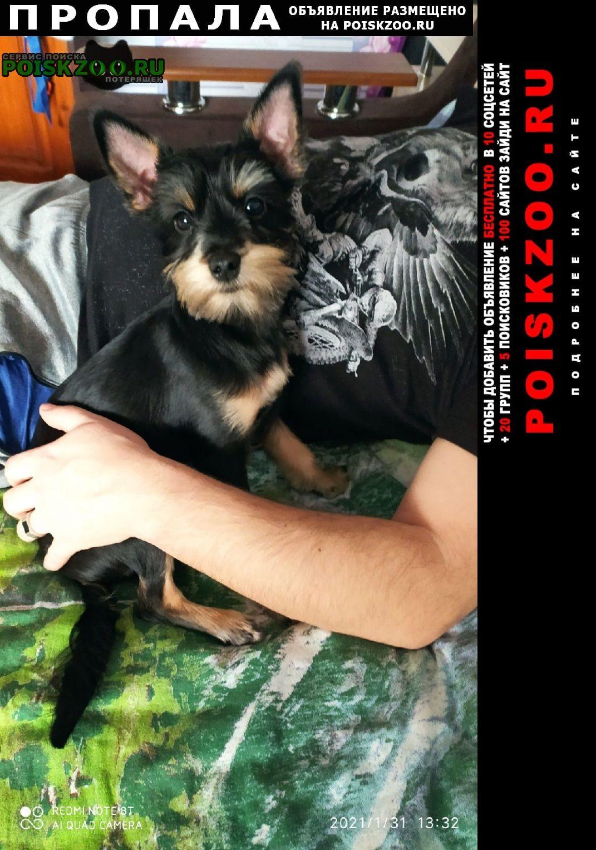 Пропала собака кобель наш любимец Приозерск