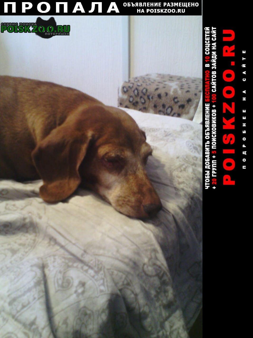 Пропала собака Куртамыш