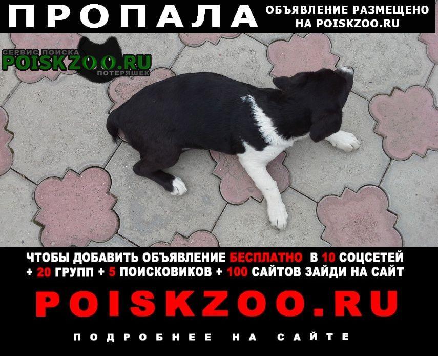 Пропала собака девочка, 1 год, дворняжка Пятигорск