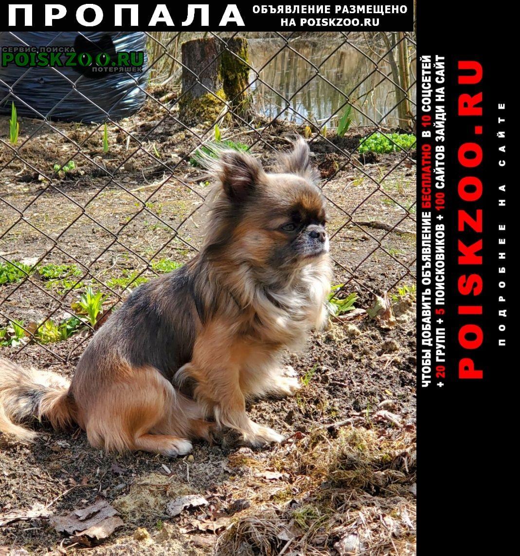 Пропала собака кобель Воскресенск