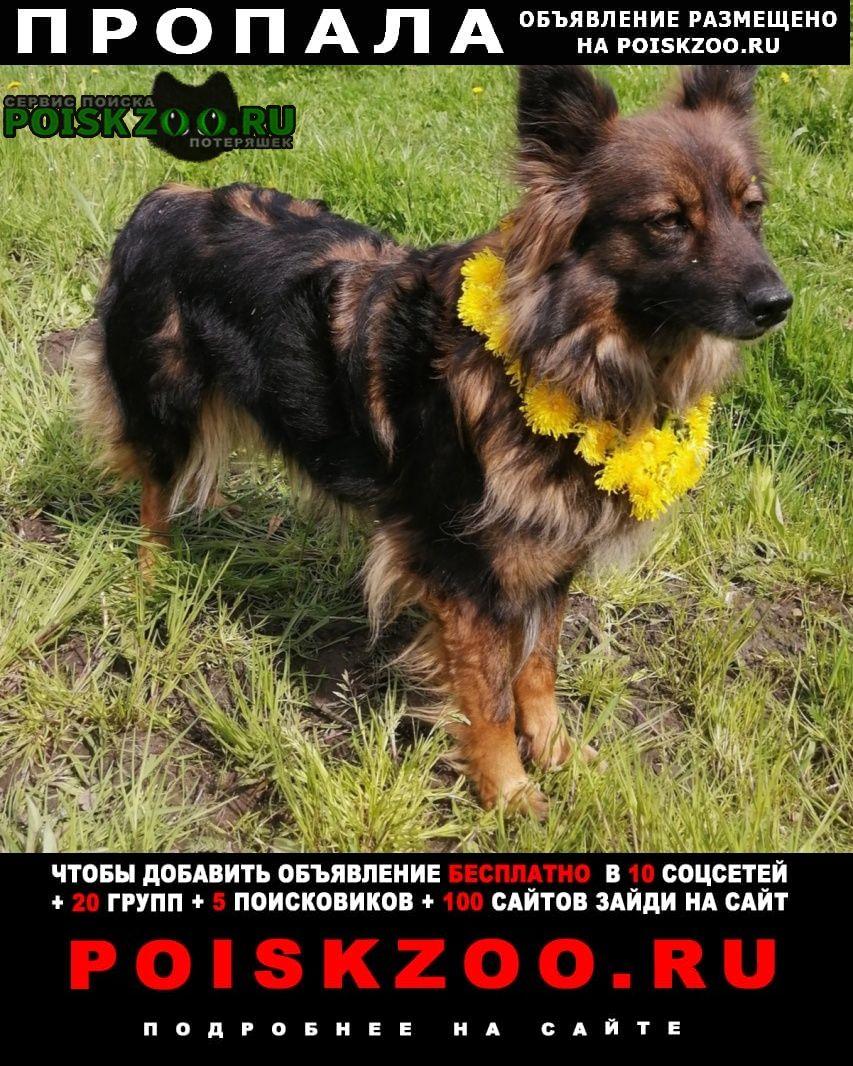 Пропала собака Рыбинск