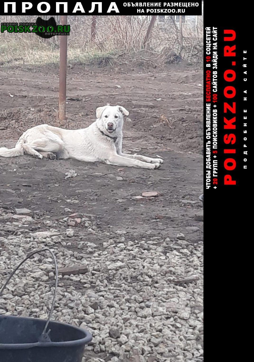 Пропала собака кобель Мценск