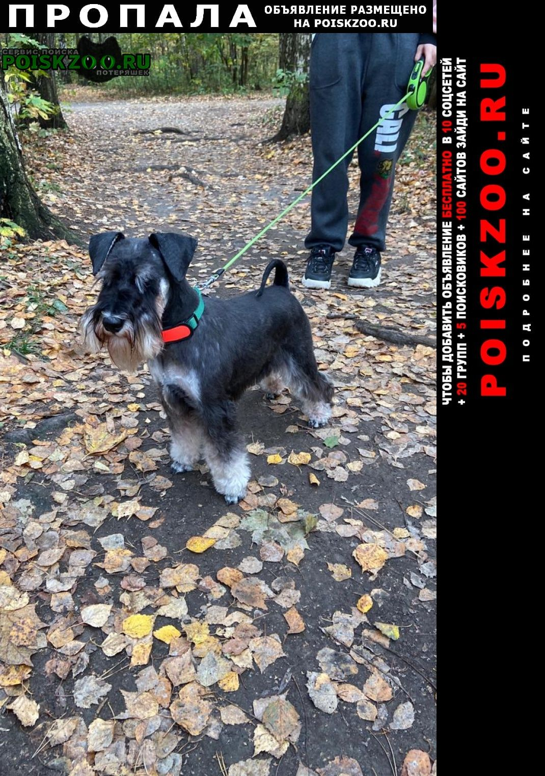 Пропала собака кобель в районе бибирево Москва