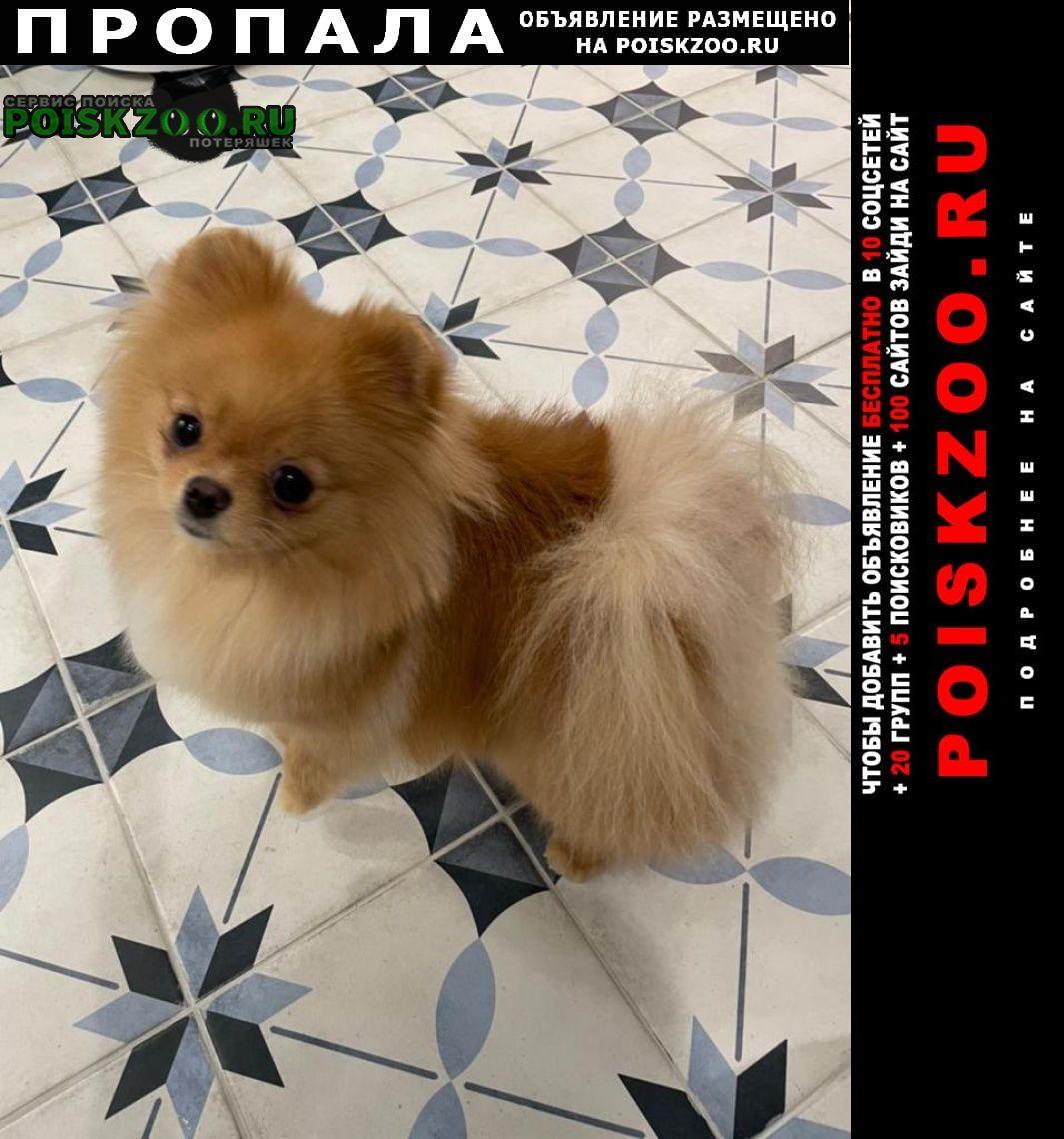 Пропала собака шпиц дэйзи Москва
