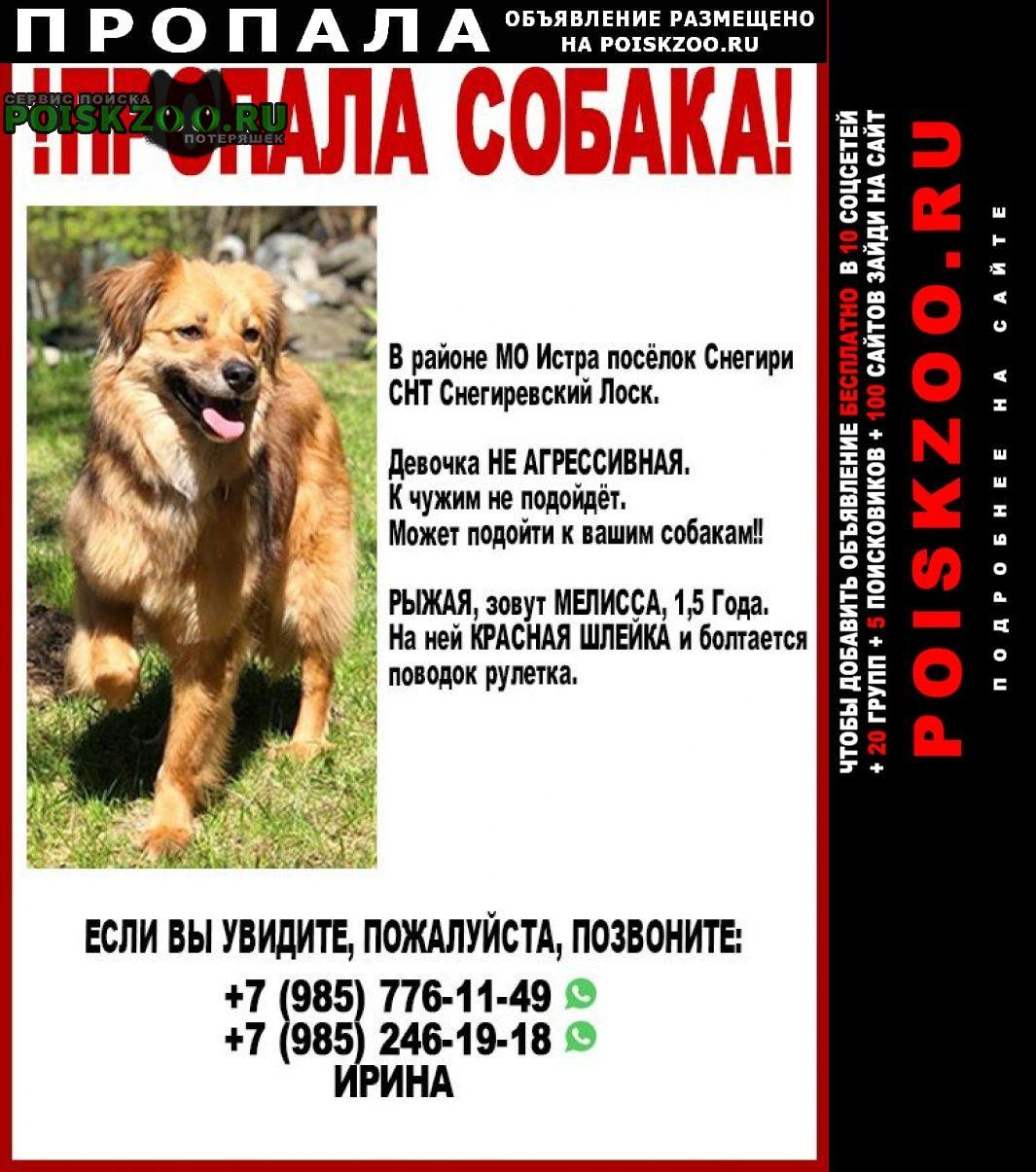 Пропала собака Истра