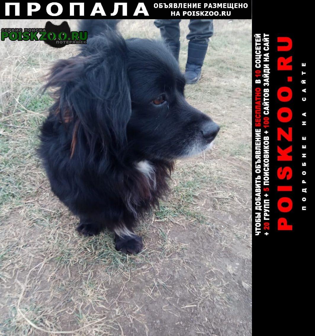 Пропала собака кобель кличка малыш Анапа