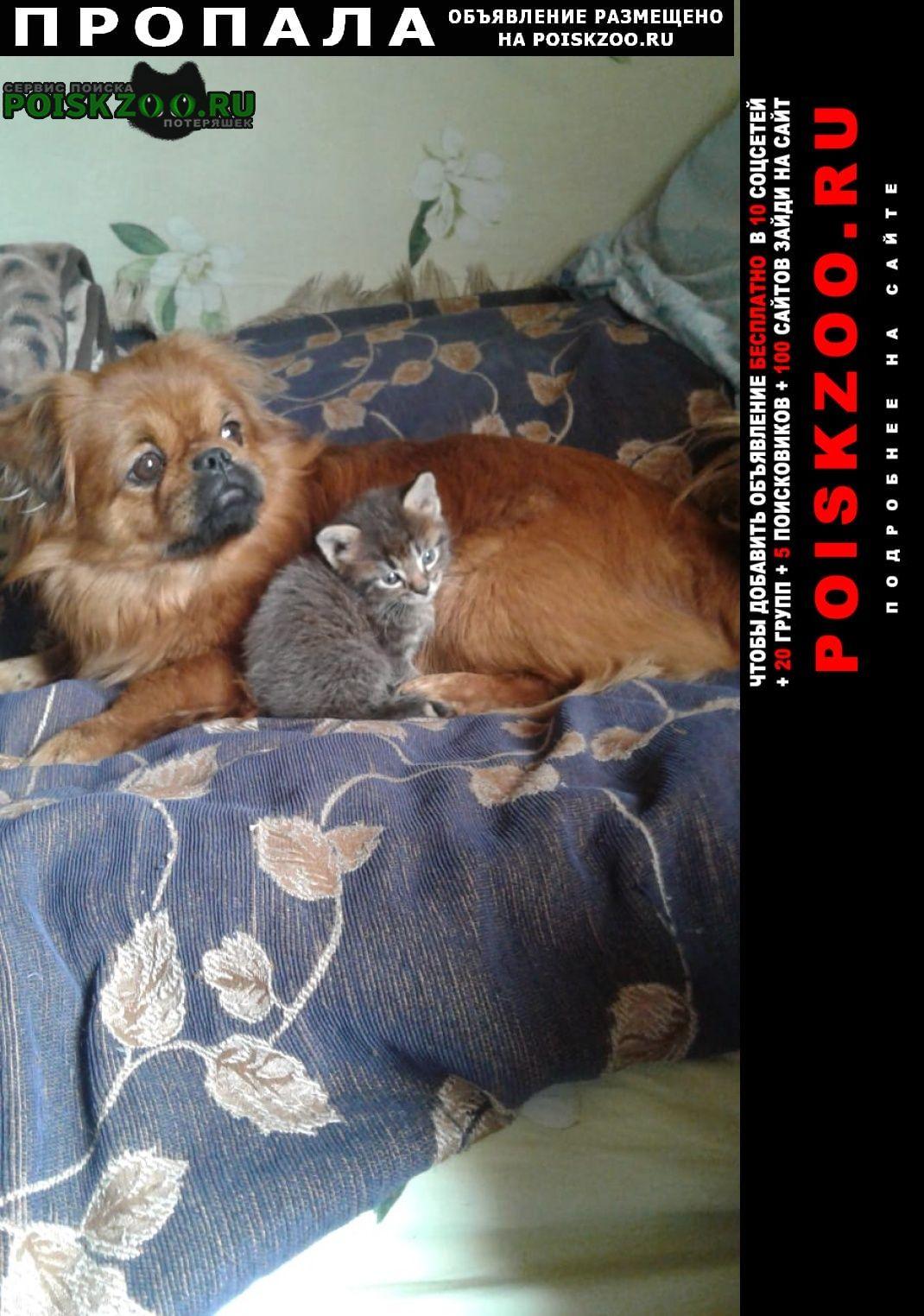 Пропала собака кобель Азов
