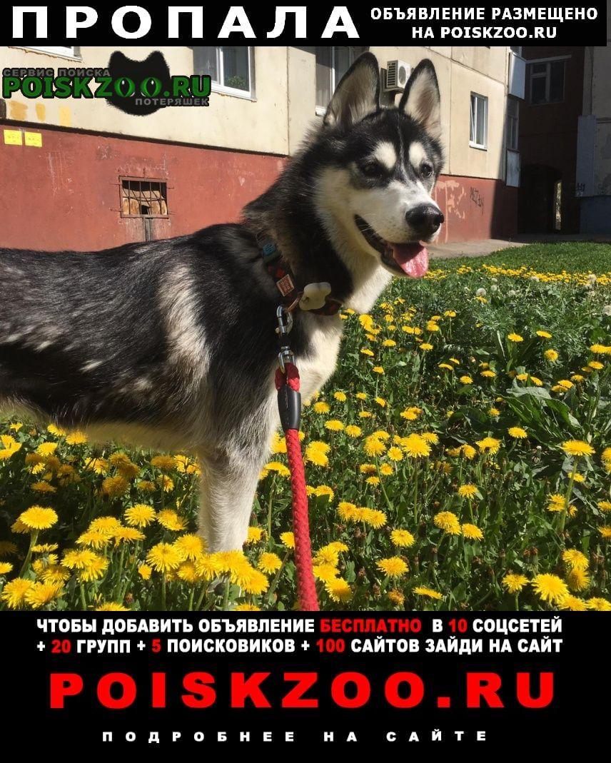 Пропала собака дёма девочка хаски Уфа